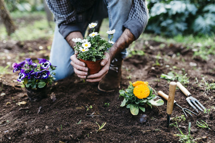 Midsection of person holding flowering plant on field