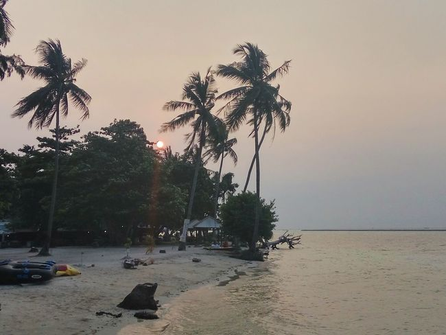 Sunset at Tidung Island. Thousand Island, Indonesia Tree Water No People Beach Nature Palm Tree Sky Beauty In Nature Sea INDONESIA Live For The Story Travel Destinations The Great Outdoors - 2017 EyeEm Awards The Street Photographer - 2017 EyeEm Awards