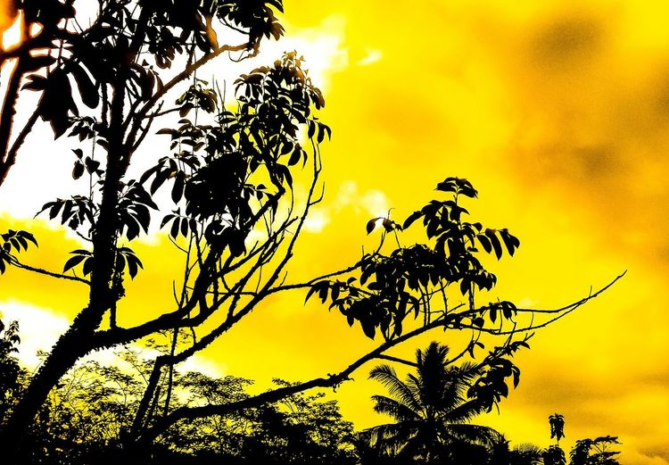 Nature Silhouette Tree Low Angle View Outdoors Sky Yellow Sunset Beauty In Nature No People Backgrounds Growth Branch Day Flower Close-up EyeEm Selects EyeEmNewHere The Week On EyeEm EyeEmBestPics EyeEm Gallery First Eyeem Photo EyeEm Nature Lover EyeEm Best Shots Eyeemphotography
