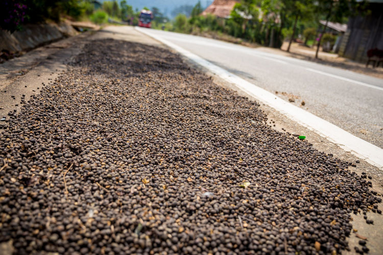 Tha harvest time Asphalt Coffee Time Drying On Floor Strainge The Harvest Transportation Vietnam