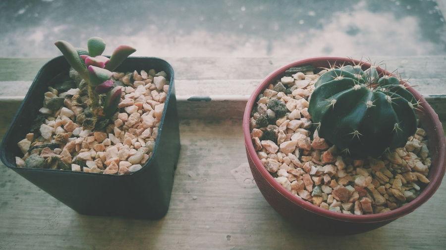 Cactus Vintage Vintage Style Slow Life Plant Nature Teo Green Cactuslover Cactus Barrel Cactus Growing Plant Life Flower Head