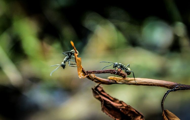 Close-up Beauty In Nature Animal Themes Macrophotography Ant Photooftheday Indonesia_photography