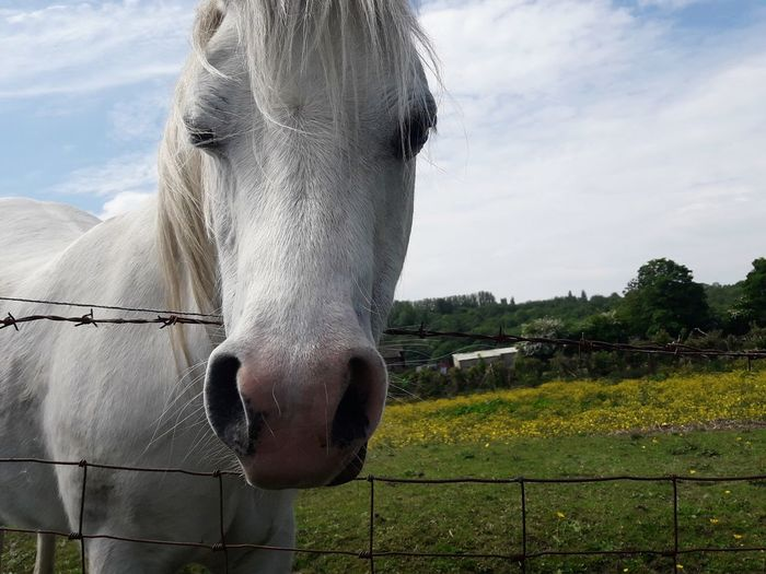 Portrait of horse standing on field against sky