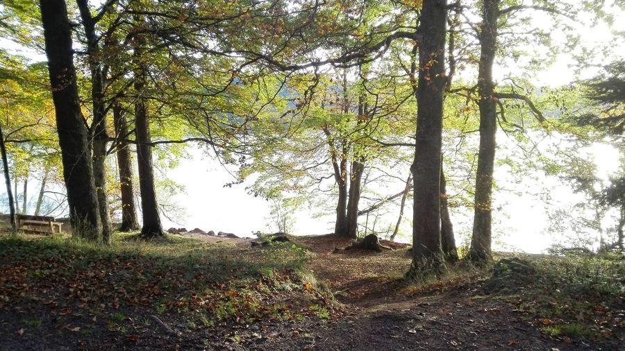 Lac Du Bouchet Arbres Nature Chemin