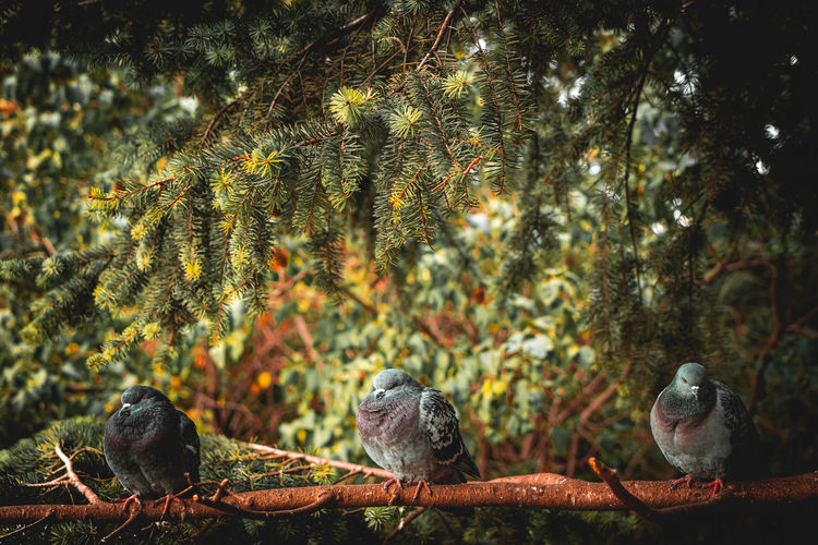 Low angle view of pigeons perching on tree in forest