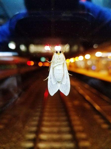 Bugslife Bug Bugs Moth Mothselfie