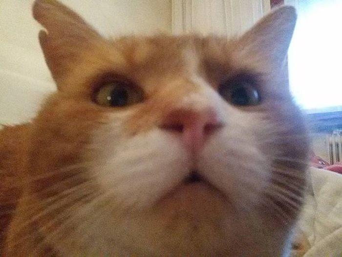 My big Romeo BIG Romeo Grande Gattone Gattorosso Redcat Espressione Figo Troppobello Troppofigo Cool Primopiano Baffoni Vibrisse Nasino Occhigialli Occhioni Cat Miao Meow Gatto Rosso