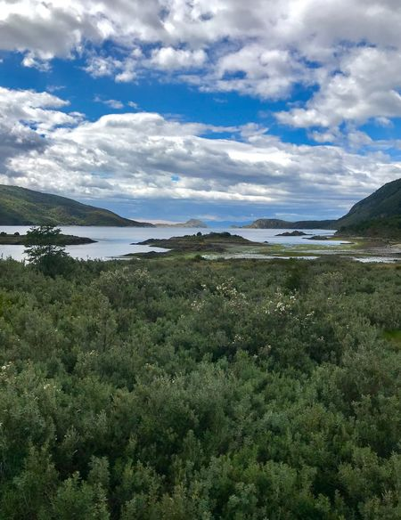 Cabo De Hornos National Park Tierra Del Fuego Stratocumulus Lenga Trees Lake Beauty In Nature Nature Scenics Sky Cloud - Sky Water Tranquil Scene Landscape Tranquility Day No People Outdoors Grass Green Color Mountain Tree