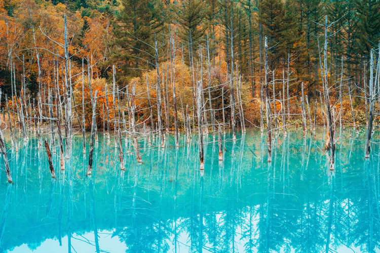Water Tree Plant Tranquility Reflection Beauty In Nature Nature Lake Forest Day Tranquil Scene No People Scenics - Nature Waterfront Land Non-urban Scene Outdoors Growth Standing Water Turquoise Colored Clean Pine Woodland