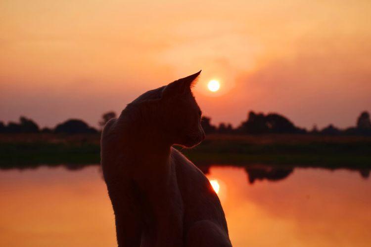 Silhouette of man against orange sunset sky