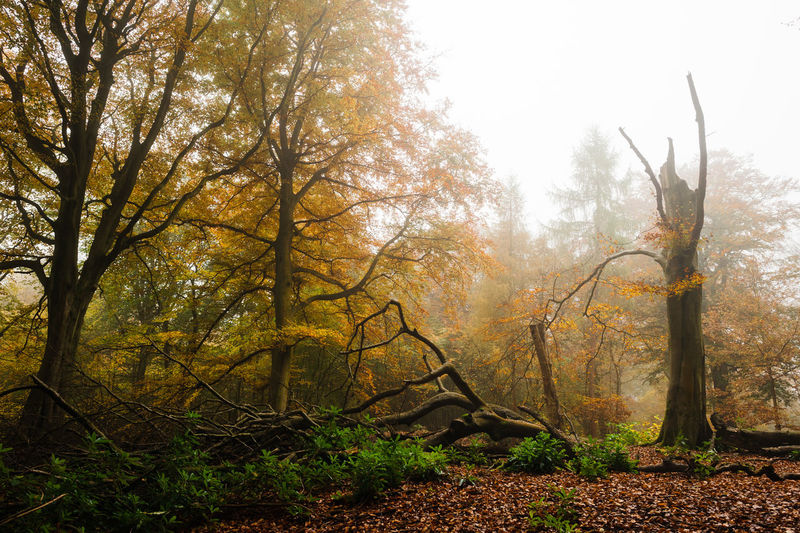 The Great Outdoors - 2018 EyeEm Awards Autumn Collection Beauty In Nature Mist Non-urban Scene Outdoors Tranquility Tree Tree Trunk