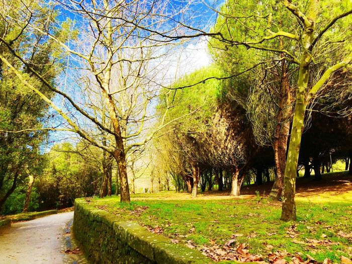 Enchanted forest🌴🌳🌲🌱 Plant Tree Nature Growth Day Park No People Tranquility Sunlight Beauty In Nature Green Color Tranquil Scene Land