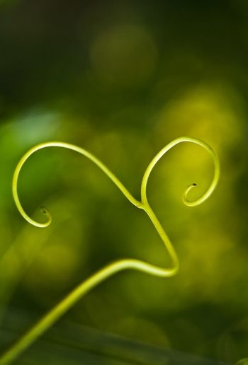 Beauty In Nature Close-up Day Fragility Freshness Green Color Growth Nature No People Outdoors Plant Tendril