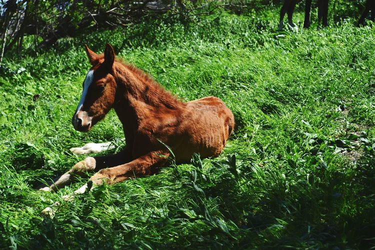 Horse resting on field