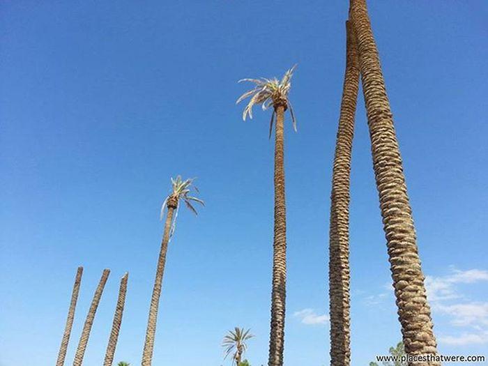 Beheahed Palms Abandoned California Urbanexploration Urbex Abandonedplaces Lakedolores Picoftheday Newberrysprings Abandonedcalifornia Abandonedamerica Rockahoola Photography Amazingplaces Waterpark Mojave MojaveDesert Abandonedbuildings