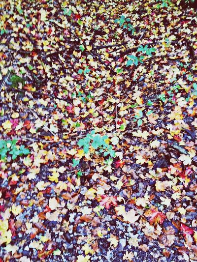 Clara Filter Colors Of Autumn Leaves
