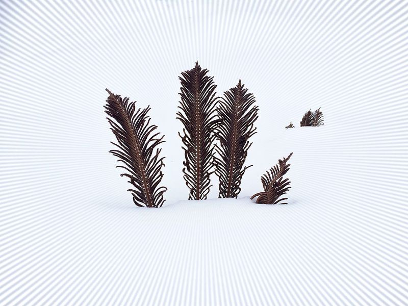 herbal feathers Feathers Herbal Feathers In Forest Leaf Nature No People Snow Winter