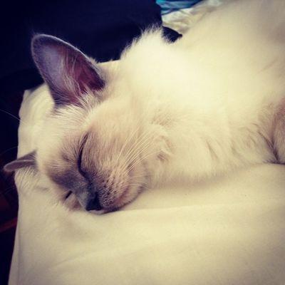 #kitty Kitty
