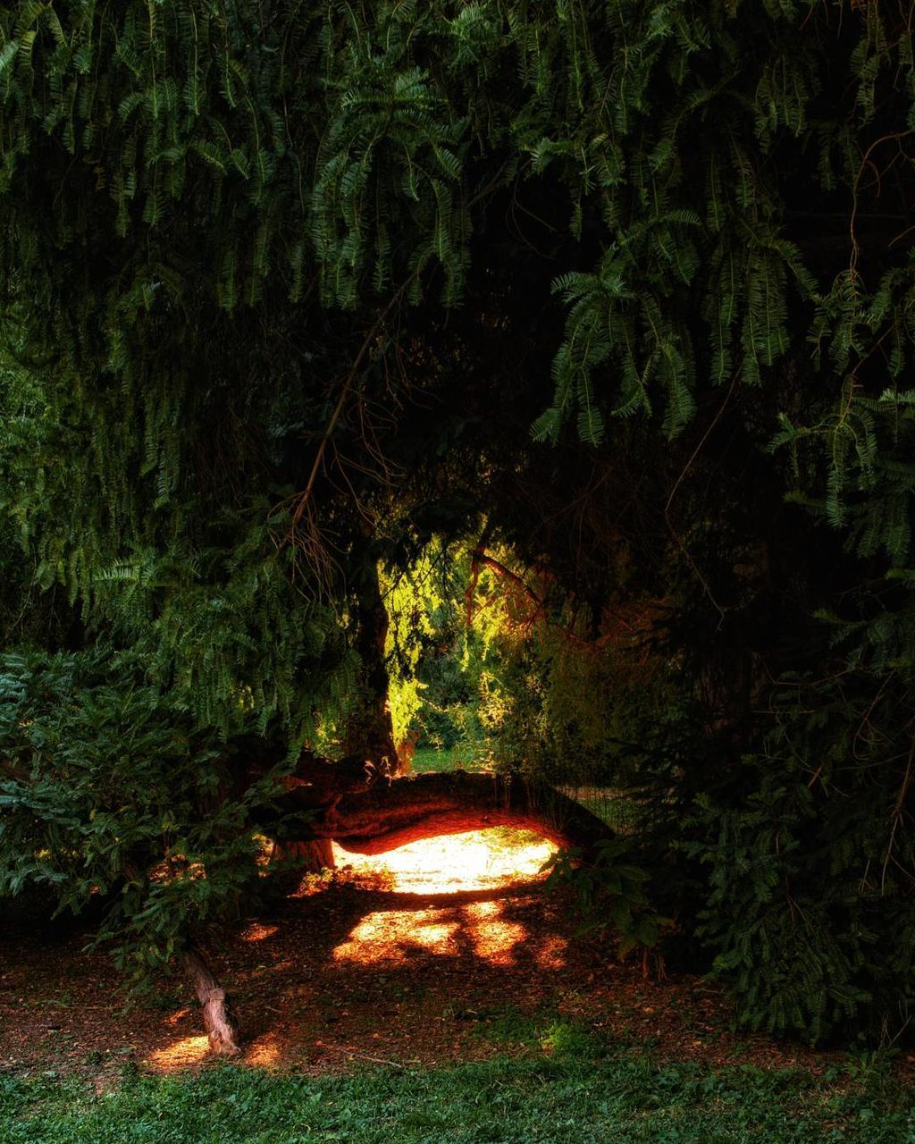 SCENIC VIEW OF FOREST AT NIGHT