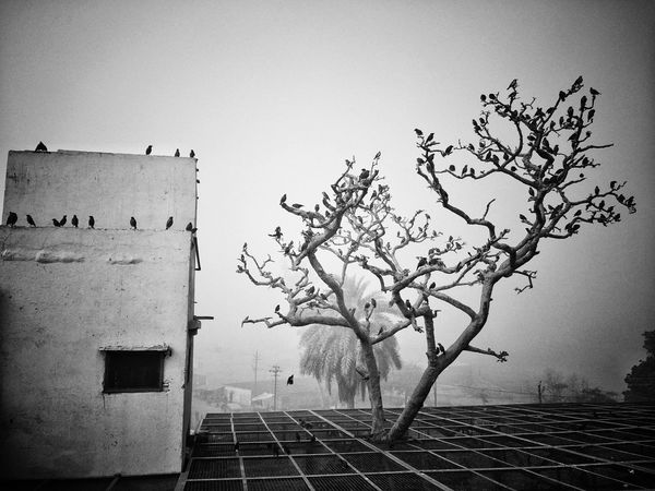 birds day out Yashpalsinglaphotography EyeEm Best Shots EyeNewHereEditorPic's Eyeem Market EyeEm Selects EyeEm Gallery Perspective Perspective Photography Streetphotography Streetphoto_bw Blackandwhite Birds Art Artistic Nature Pixelated