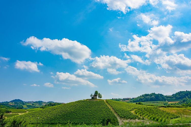 Nikon D7200 - Tokina 11-16 mm f 2.8 Agriculture Beauty In Nature Cloud - Sky Cultivated Land Eye4photography  EyeEm Best Shots Farm Field Green Color Hanging Out Italia Italy Landscape Landscape_Collection Nature Nikon Nikonphotography Non-urban Scene Panorama Rural Scene Sky Sky And Clouds Taking Photos Tranquil Scene Tranquility