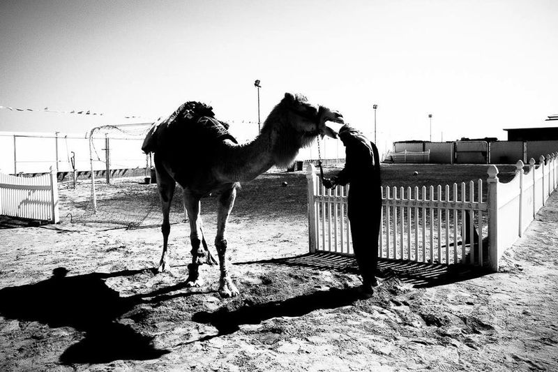 EyeEm EyeEm Best Shots Black & White Streetphoto_bw Street Photography Street Photographer Eyeem Philippines Monochrome _ Collection Everyday Street Everydaymiddleeast Visual Exercise Showcase March Shoot Your Vision Different Perspective Bnw_friday_eyeemchallenge one day in wafra kuwait.. The revenge of Camel.. part series
