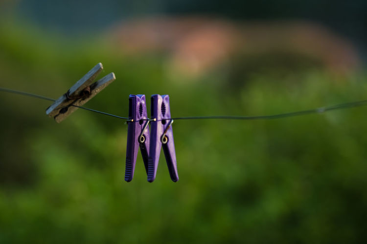 Clothesline Clothespin Focus On Foreground Hanging No People Close-up Day Clothing Nature Rope Plant Wire Outdoors Laundry Metal String Selective Focus Green Color Animal Simplicity