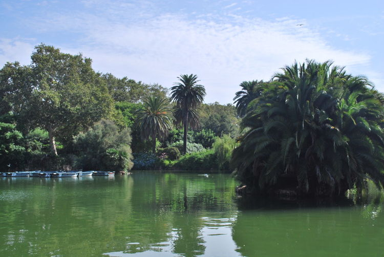 Barcelona Barcelona, Spain Beauty In Nature Catalonia Catalunya Day Garden Green Growth Lake Lake View Nature No People Outdoor Photography Outdoors Outside Photography Palm Tree Park Reflection Scenics Sky SPAIN Tree Water