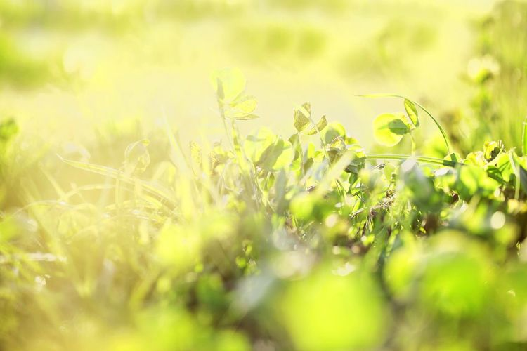 Sunlight. Lemon Lime By Motorola Outdoors Landscape Grass Colour Nature Sunlight Plants