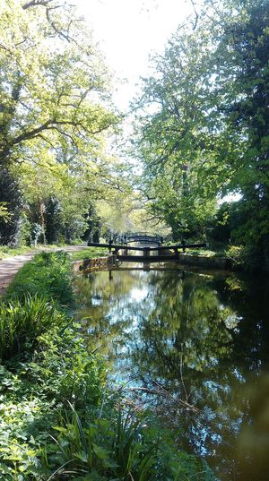 Basingstoke Canal Beauty In Nature Canal Day Growth Lock Lock Gates Nature No People Outdoors Reflection Scenics Sky Sun Surrey Countryside Towpath Tranquil Scene Tranquility Tree Walking Water Woking