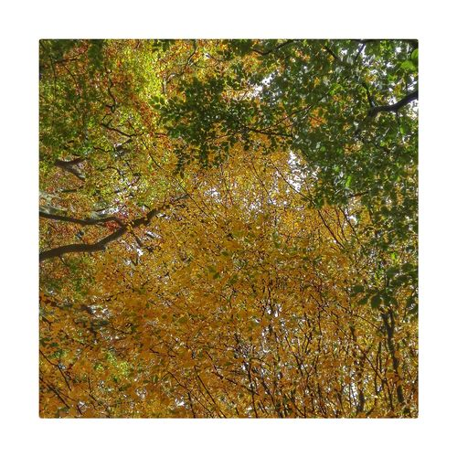 Colours of Autumn Gold Colored Frame No People Yellow Textured  Gold Day Nature Close-up Outdoors Autumn🍁🍁🍁 Lovelancashire Chorley Astley Park Tranquil Scene Lancashire Landscape Tranquility Nature Tree Beauty In Nature