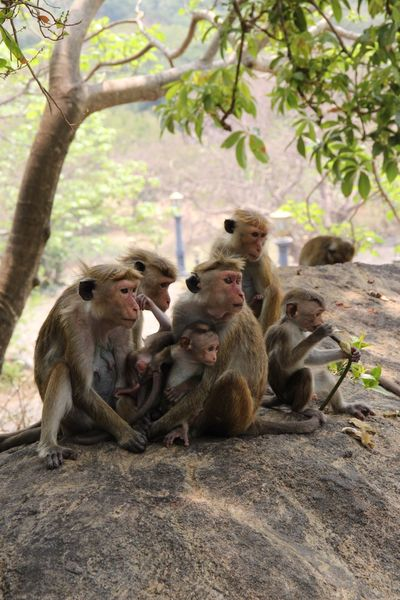 Monkey Care Mammal Animal Themes Animals In The Wild Togetherness Sitting Animal Wildlife Tree Primate Nature Day Outdoors No People Ape Close-up Baboon