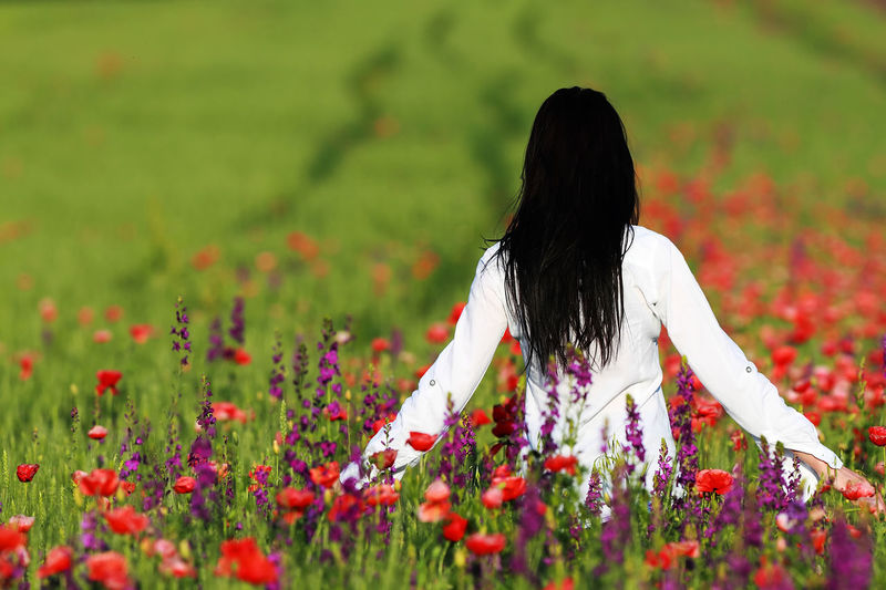 Rear View Of Woman With Arms Outstretched Standing Amidst Poppy Flowers