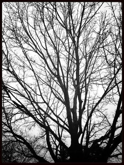 Blackandwhite TreePorn KCe Filter