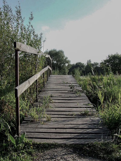 Bridge Day Field Growth No People Non-urban Scene Outdoors Plant Railing Scenics Sky Solitude Steps The Way Forward Tranquil Scene Tranquility Tree Wooden Wooden Bridge