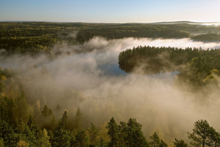 Aerial View Aulanko Beauty In Nature Before Sunrise Countryside Day Finland Fog Foggy Morning Forest Idyllic Scenery Landscape Mist Misty Morning Morning Nature No People Outdoors Outlook Peaceful View Scenery Silence Sky Tranquil Scene Tree