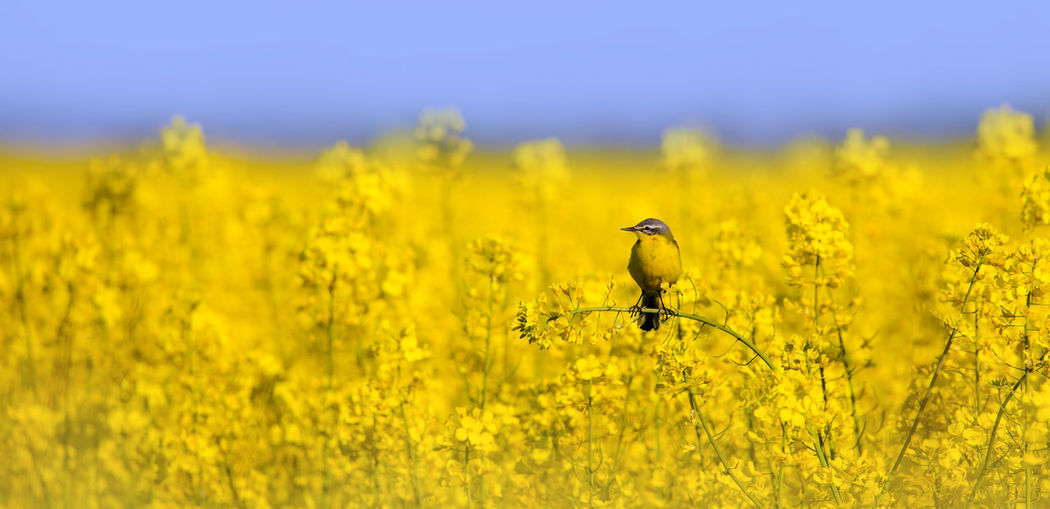 Scenic view of yellow flower on field