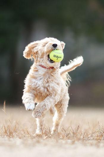 More doggie