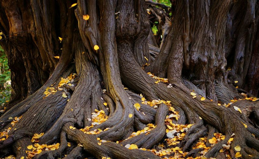 Close-Up Of Tree Roots In Forest