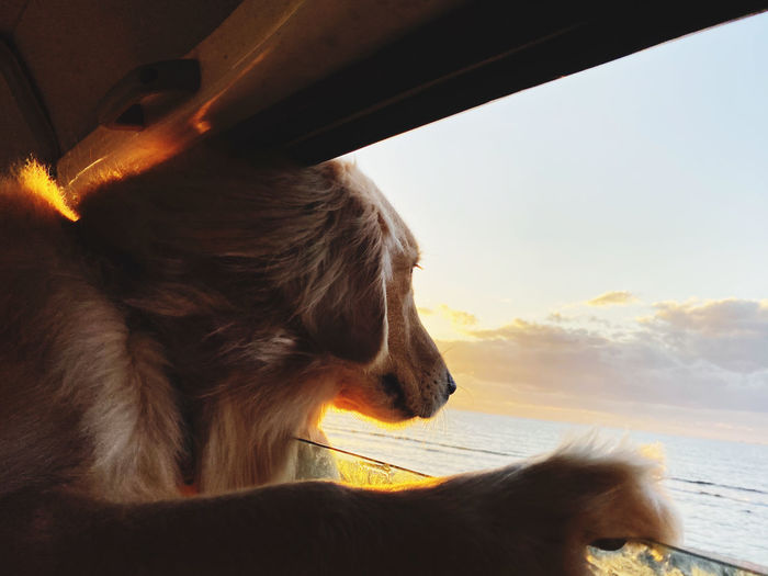 Close-up of dog looking away against sky during sunset