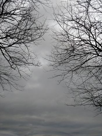 Todays Weather Report Dark And Dreary Gloomy Weather From My Point Of View My Cloud Obsession☁️ I Love Bare Trees Bare Trees Tree And Sky Sky And Trees I Miss Sunshine Desperately Seeking Summer Nap Time