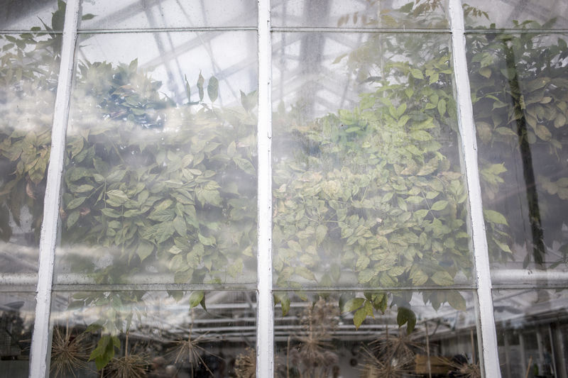 Close-up of plants in greenhouse