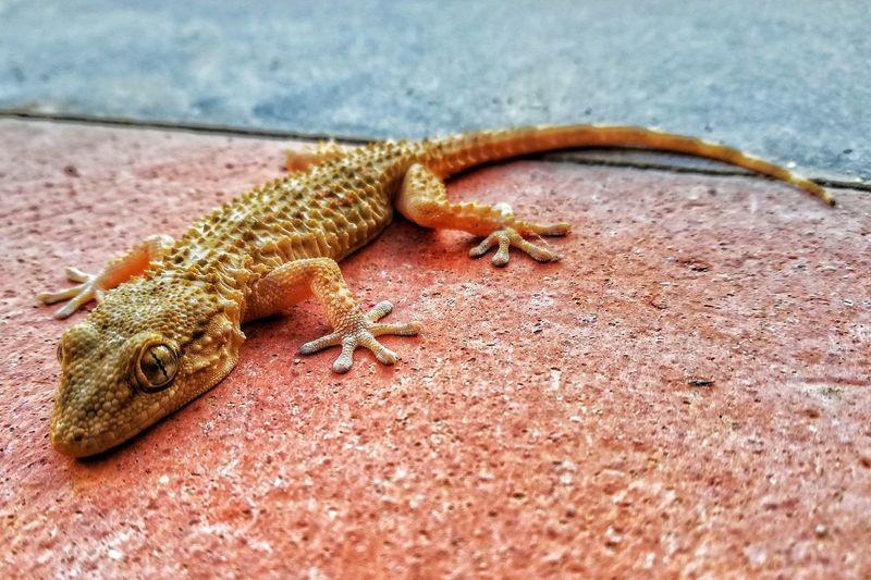 High angle view of lizard on rock