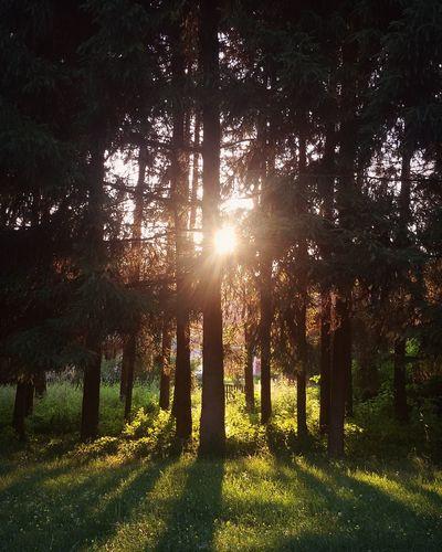 Sunset Trees Lovelyview