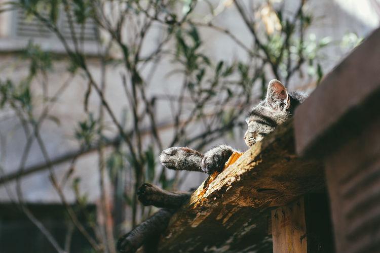 Cat Lying On Roof