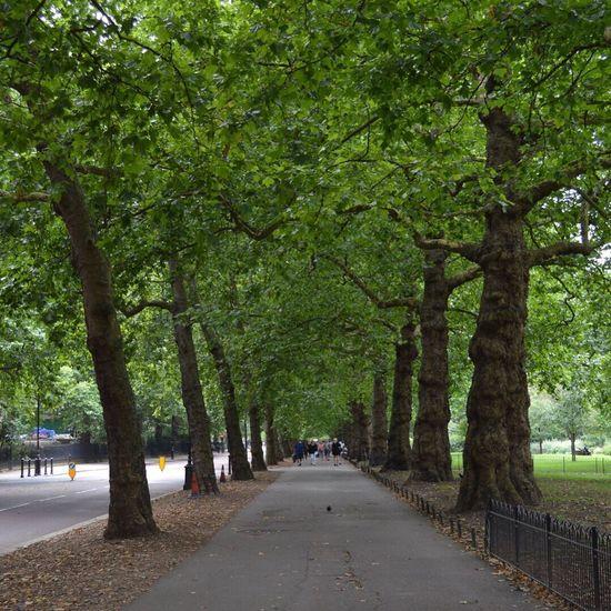 No Filter London Tree Beauty In Nature Royalgardens