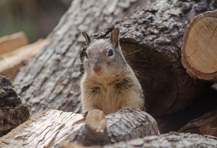 #Nature  #Squirrel #animal #wildlife Animal Themes Animal Wildlife Nature One Animal