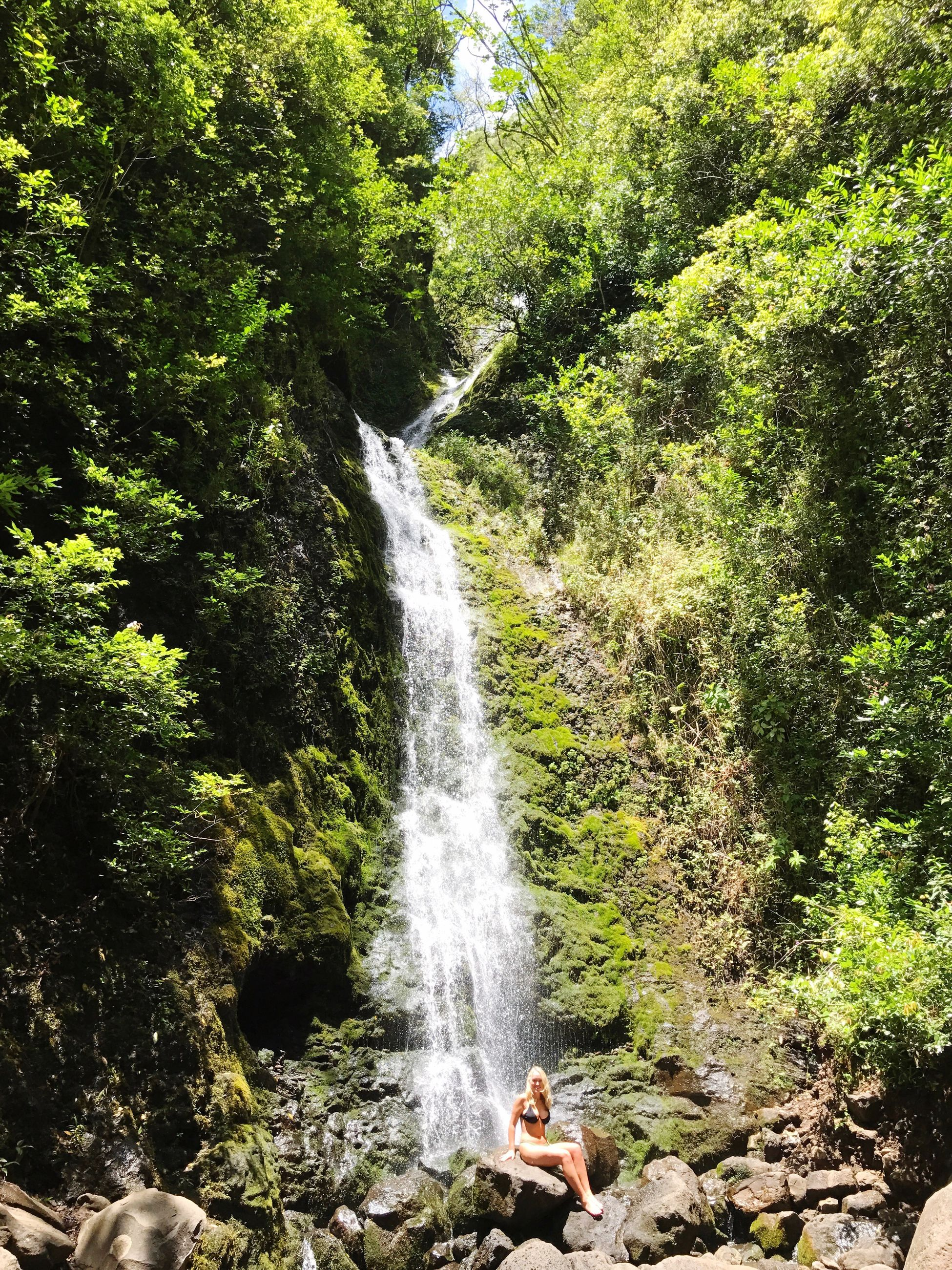 waterfall, forest, nature, beauty in nature, tree, growth, motion, scenics, day, water, outdoors, no people, freshness
