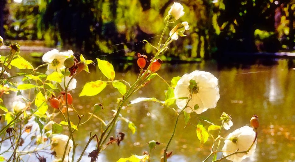 Close-up of flowering plants against blurred background