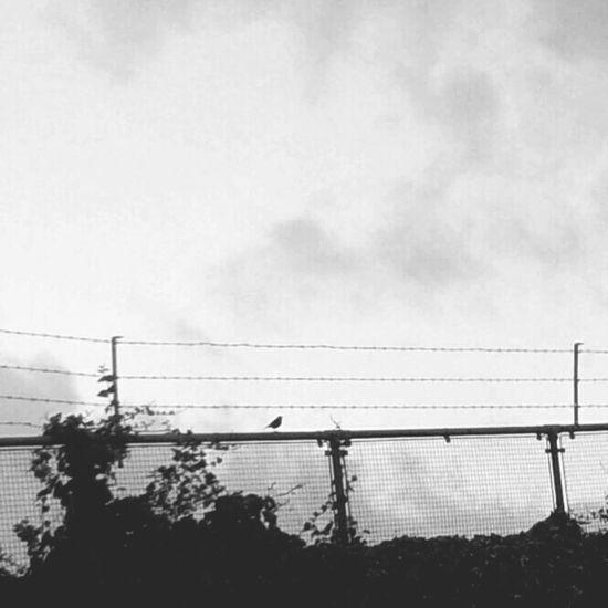 Barbed Wire Wednesday Little Bird Tacky Itsametaphor